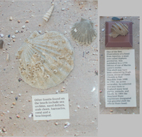 Fossil Collecting Objects